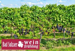 Bad Sulzaer Weinfrühling 2020 @ Stadt Bad Sulza