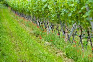 """Wanderung """"Rund um die Weinberge- von gestern und heute"""" @ Treffpunkt Thüringer Weintor Bad Sulza"""